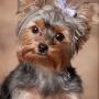 Фото собак в Сочи